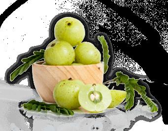 Wholesale Bulk Organic Amla