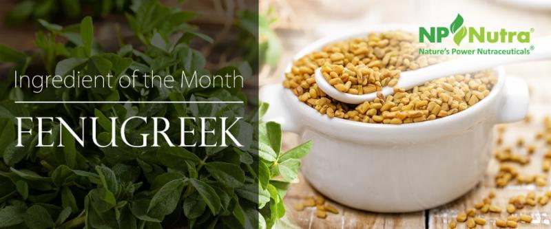 NP Nutra Ingredient of the Month: Fenugreek Powder